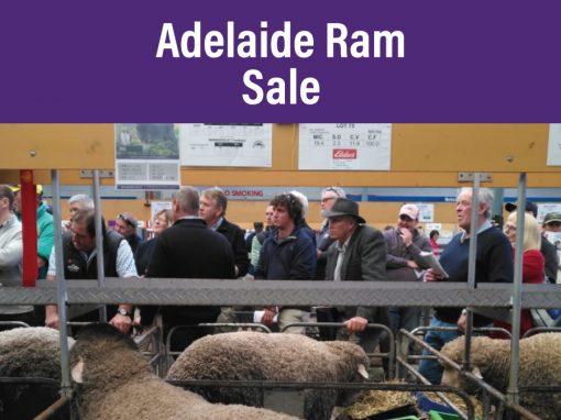 Adelaide Ram Sale