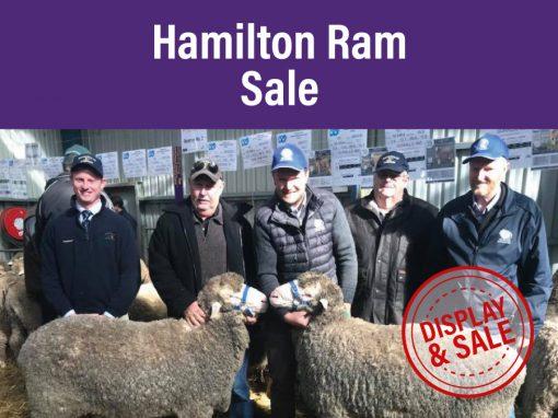 Hamilton Ram Sale